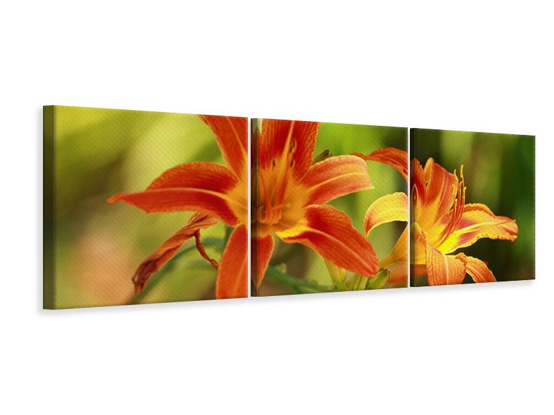 Panorama Leinwandbild 3-teilig Natural Lilien