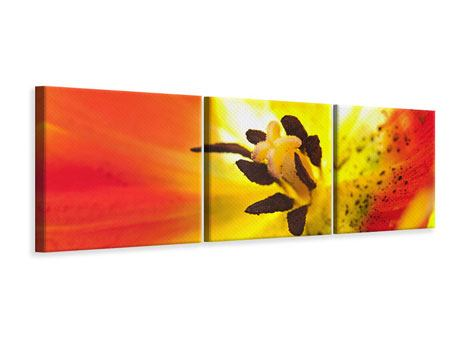 Panorama Leinwandbild 3-teilig Die Narbe einer Tulpe XXL
