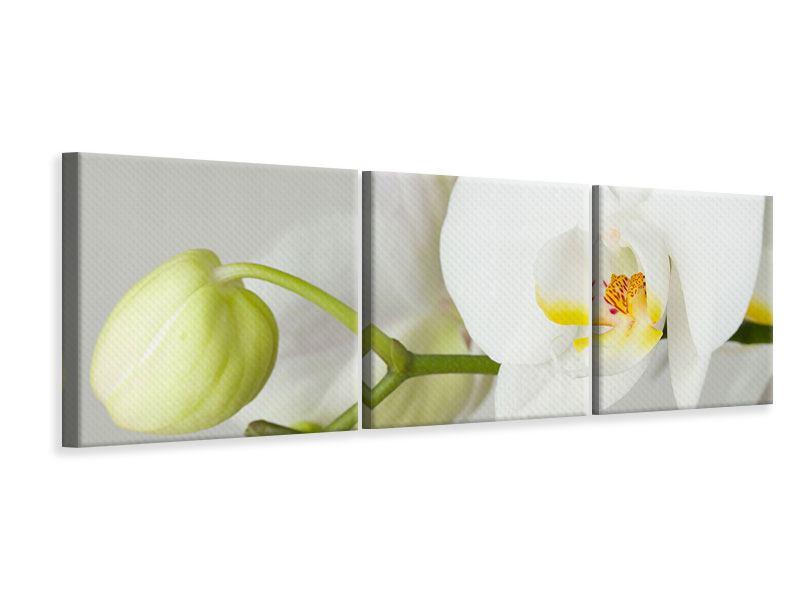 Panorama Leinwandbild 3-teilig Riesenorchidee