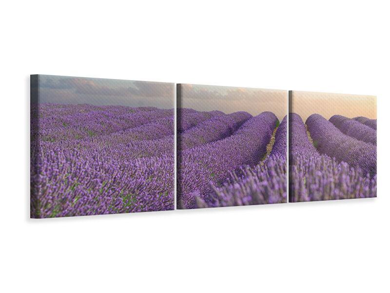 Panorama Leinwandbild 3-teilig Das blühende Lavendelfeld