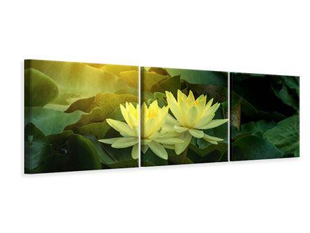 Panorama Leinwandbild 3-teilig Wilde Lotus