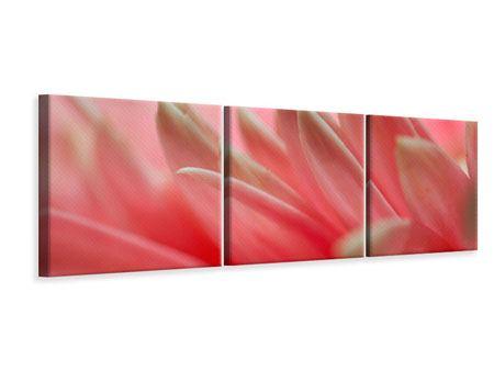 Panorama Leinwandbild 3-teilig Close Up einer Blüte