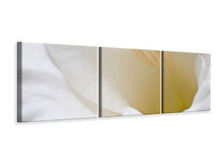 Panorama Leinwandbild 3-teilig In einer Blüte