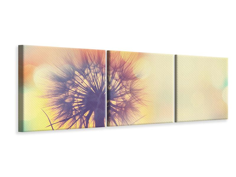 Panorama Leinwandbild 3-teilig Die Pusteblume im Licht