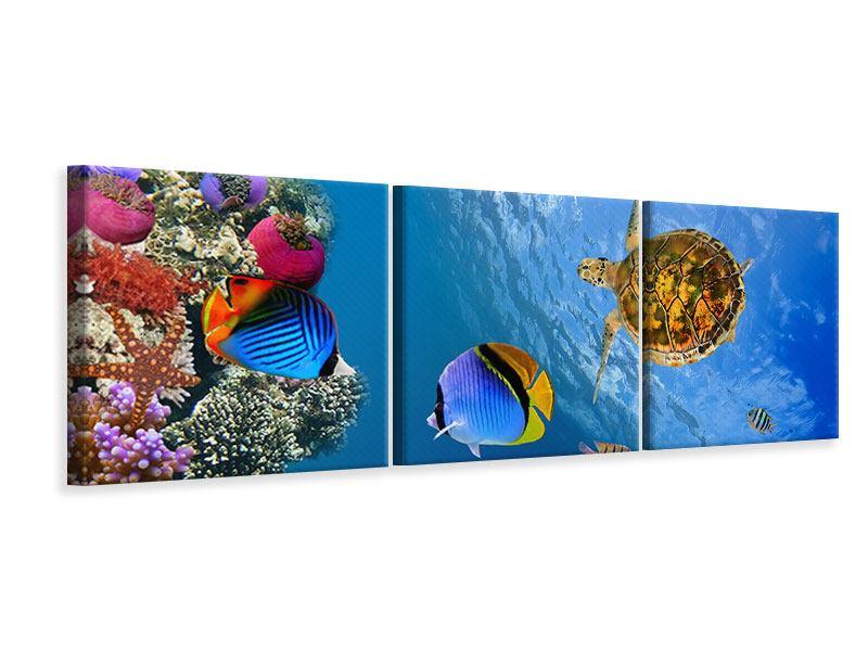Panorama Leinwandbild 3-teilig Fisch im Wasser
