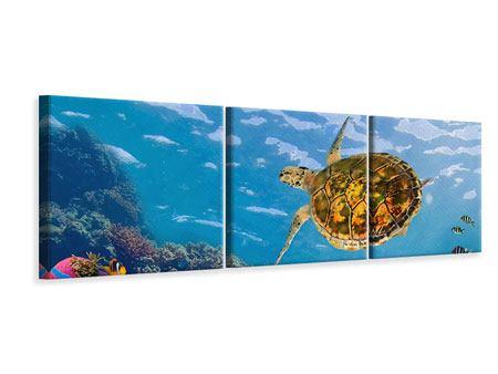 Panorama Leinwandbild 3-teilig Die Wasserschildkröte