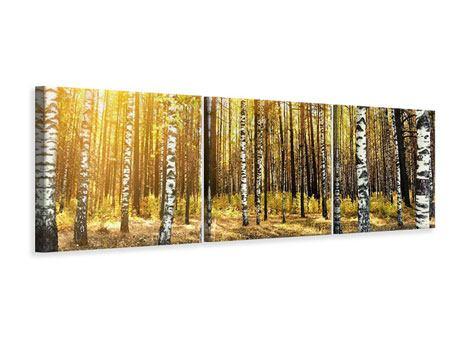 Panorama Leinwandbild 3-teilig Birkenwald