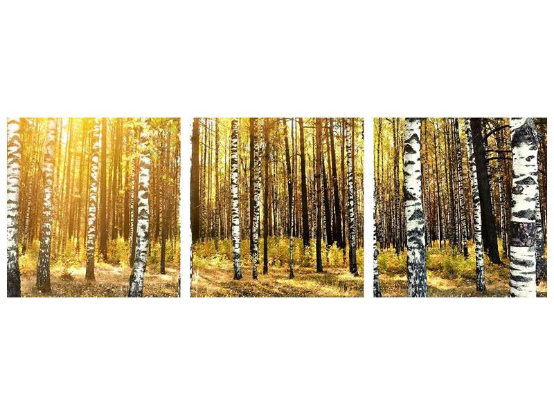 Panoramic 3 Piece Canvas Print Birch Forest