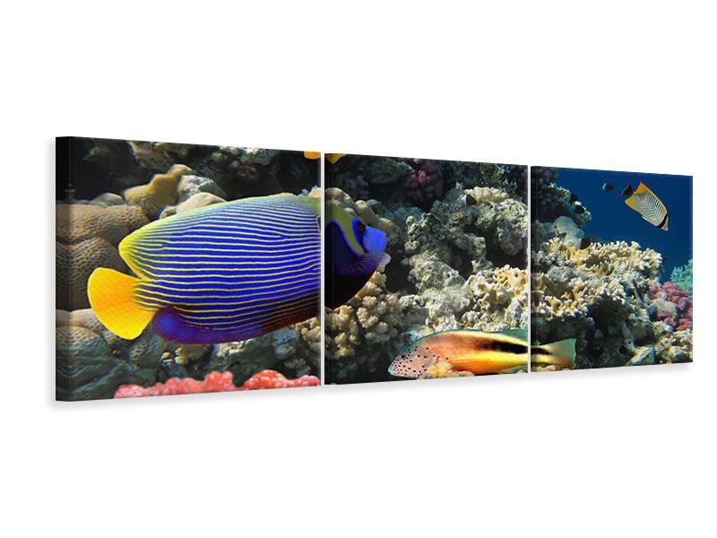 Panorama Leinwandbild 3-teilig Das Aquarium