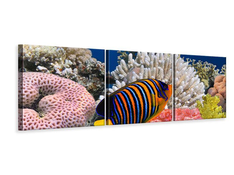 Panorama Leinwandbild 3-teilig Mit den Fischen tauchen