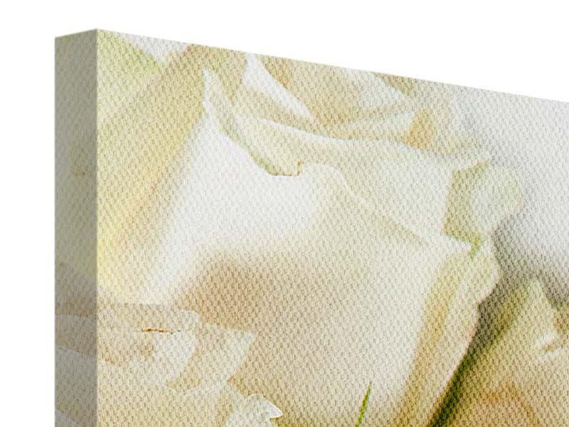 Panorama Leinwandbild 3-teilig Weisse Rosen