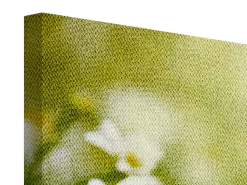 Panorama Leinwandbild 3-teilig Die Gänseblümchen