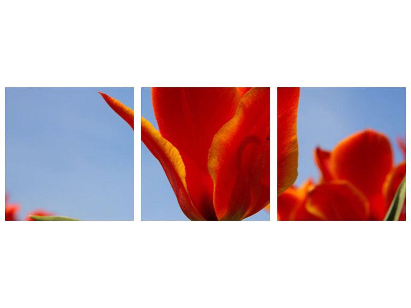 Panorama Leinwandbild 3-teilig Rote Tulpen in XXL