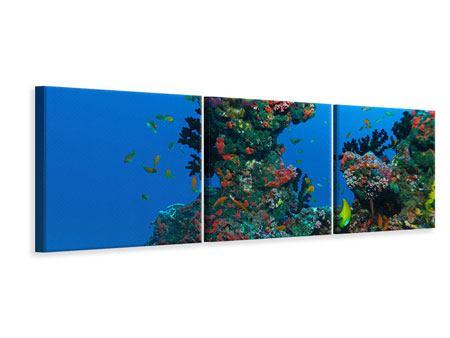 Panorama Leinwandbild 3-teilig Die Welt der Fische