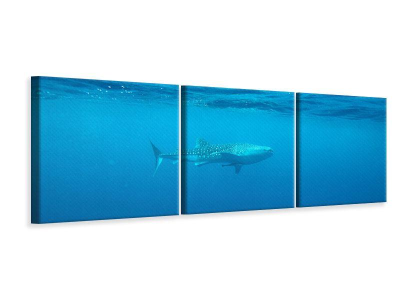 Panorama Leinwandbild 3-teilig Der Walhai