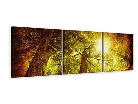 Panorama Leinwandbild 3-teilig Cedar Baum