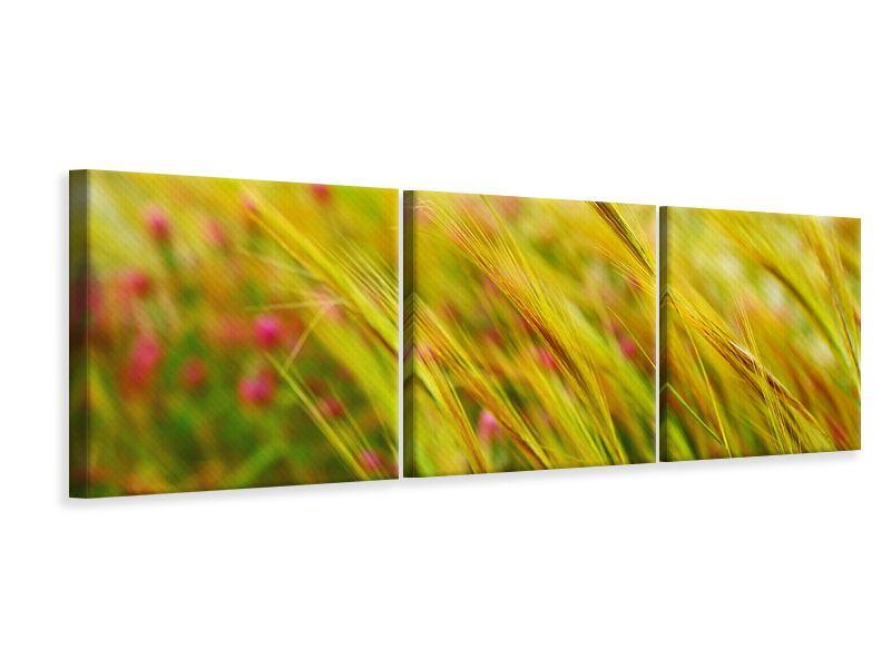 Panorama Leinwandbild 3-teilig Das Weizenfeld