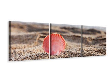 Panorama Leinwandbild 3-teilig Die Muschel