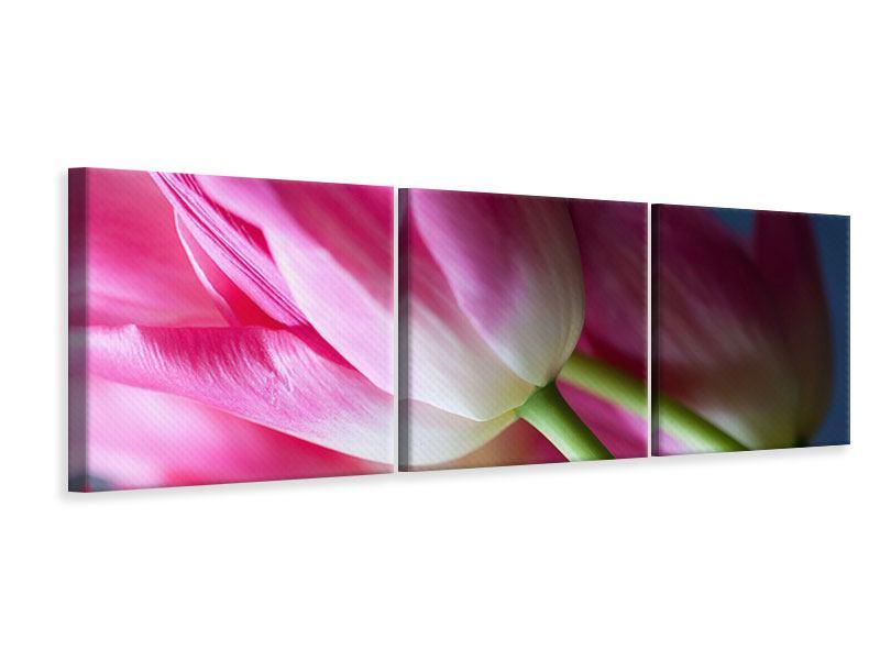 Panorama Leinwandbild 3-teilig Makro Tulpen