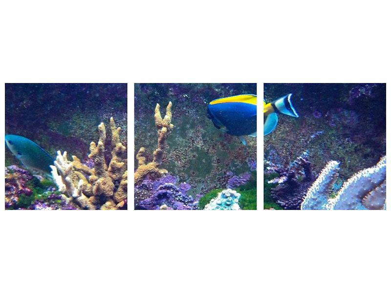 Panorama Leinwandbild 3-teilig Fische