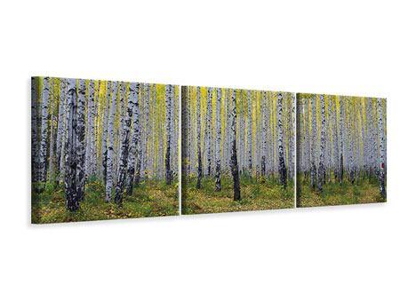 Panorama Leinwandbild 3-teilig Herbstlicher Birkenwald
