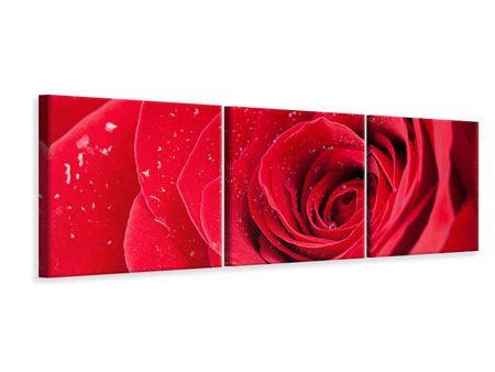 Panorama Leinwandbild 3-teilig Rote Rose im Morgentau