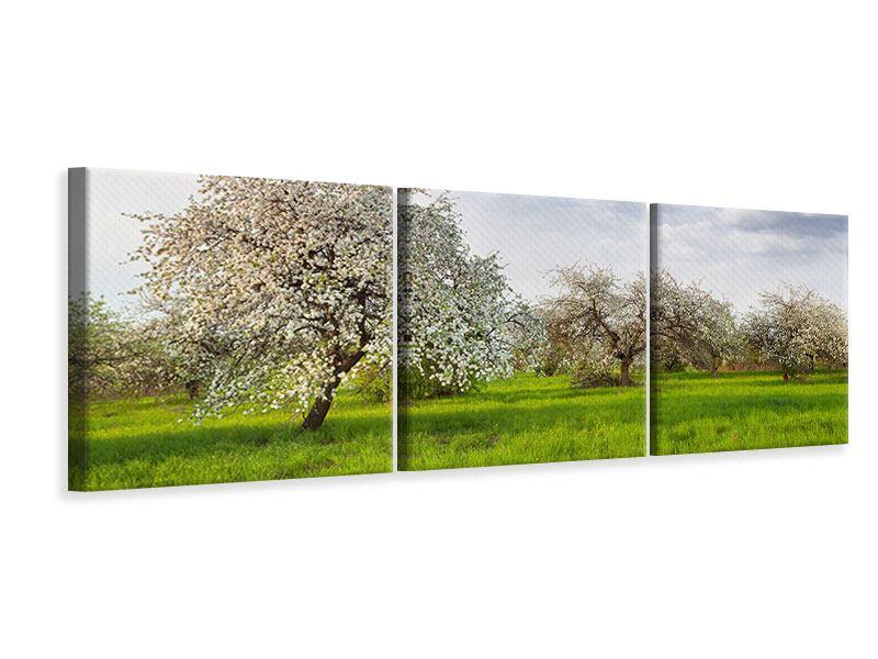Panorama Leinwandbild 3-teilig Apfelbaum-Garten