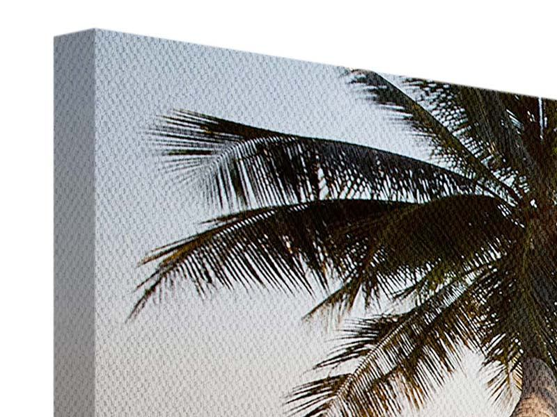 Panorama Leinwandbild 3-teilig Palme