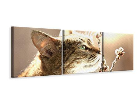 Panorama Leinwandbild 3-teilig Die Katze