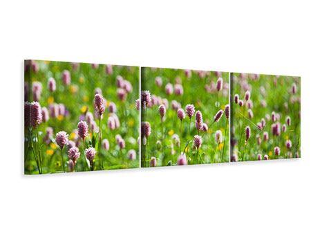 Panorama Leinwandbild 3-teilig Der Wiesenklee