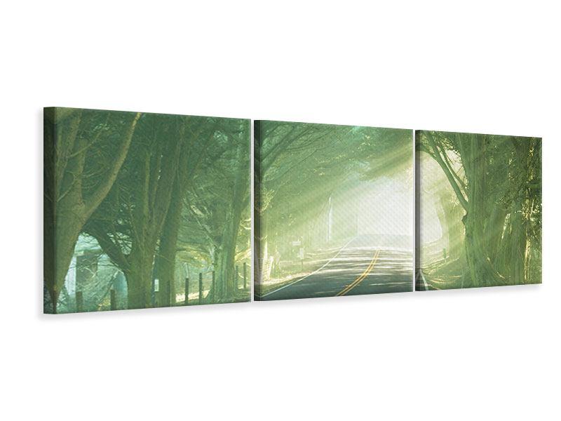 Panorama Leinwandbild 3-teilig Die Allee
