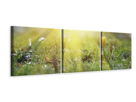 Panorama Leinwandbild 3-teilig Blumige Wiese