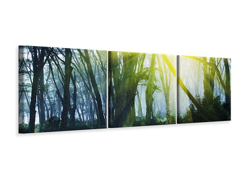 Panorama Leinwandbild 3-teilig Sonnenstrahlen im Wald
