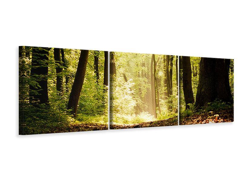 Panorama Leinwandbild 3-teilig Sonnenaufgang im Wald