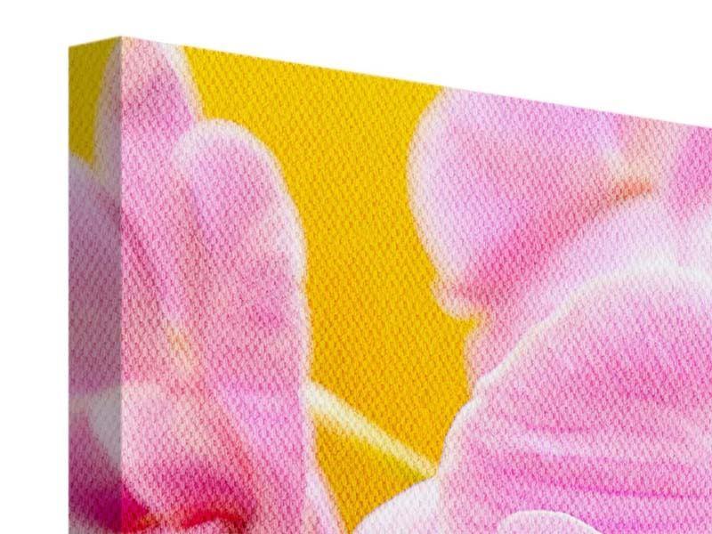 Panorama Leinwandbild 3-teilig Königliche Orchideen