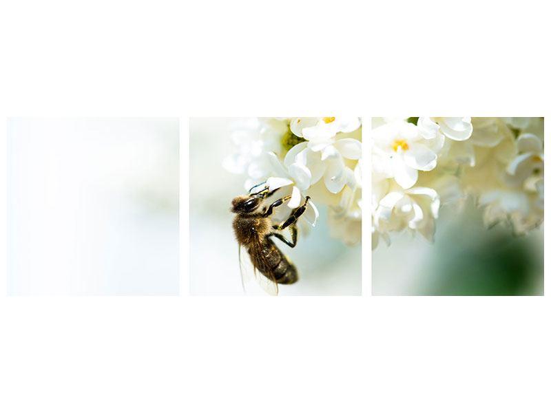 Panorama Leinwandbild 3-teilig Die Hummel und die Blüte
