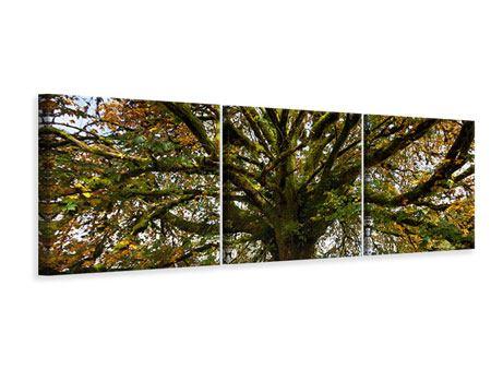 Panorama Leinwandbild 3-teilig Mein Lieblingsbaum