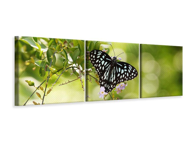 Panorama Leinwandbild 3-teilig Papilio Schmetterling XXL