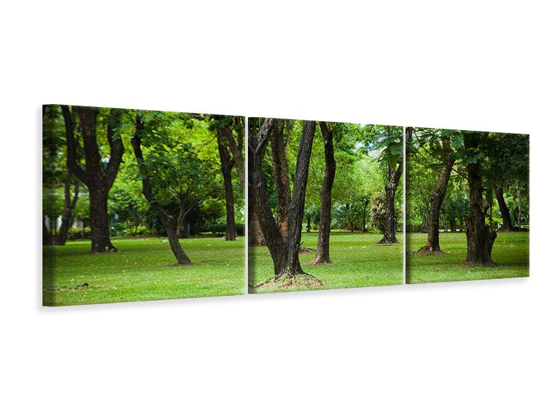 Panorama Leinwandbild 3-teilig Kirschbaum-Garten