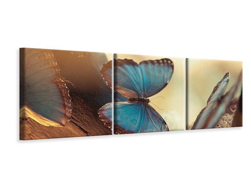Panorama Leinwandbild 3-teilig Schmetterlinge