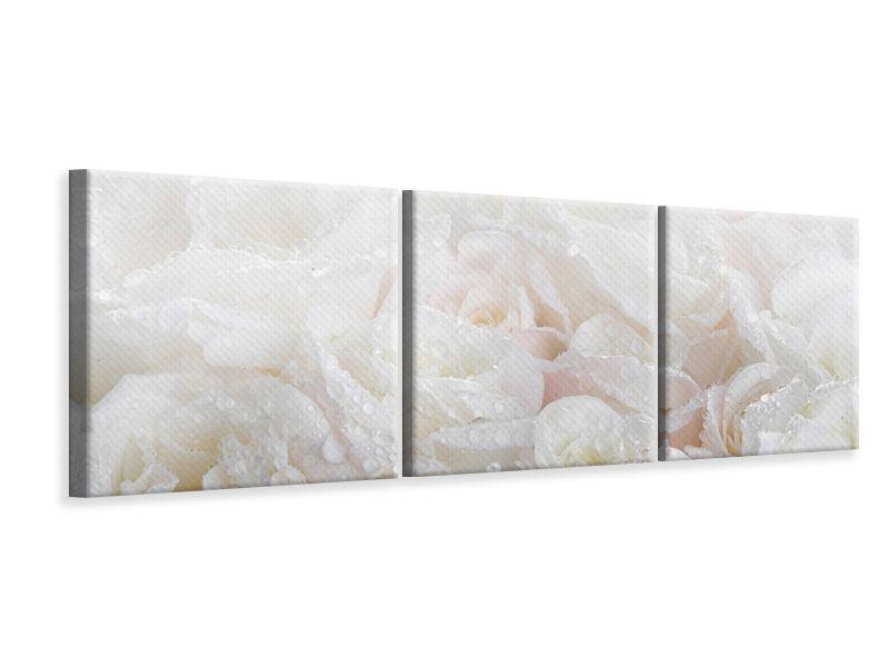 Panorama Leinwandbild 3-teilig Weisse Rosen im Morgentau