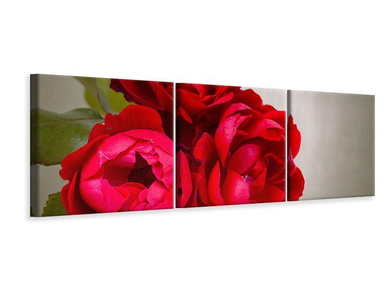 Panorama Leinwandbild 3-teilig Drei rote Rosen
