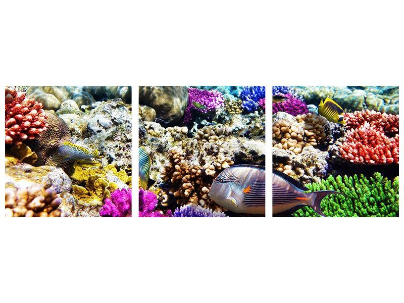 Panorama Leinwandbild 3-teilig Fischaquarium
