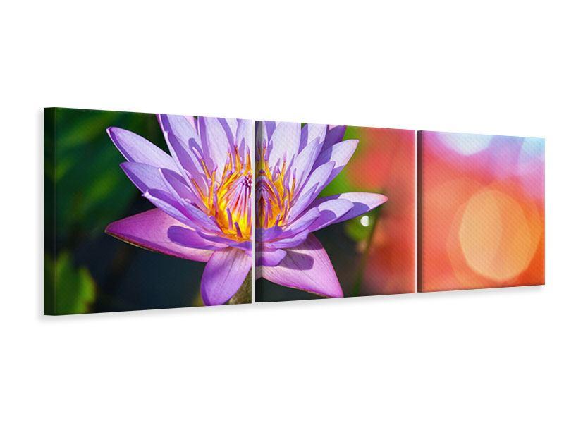 Panorama Leinwandbild 3-teilig Colored Lotus