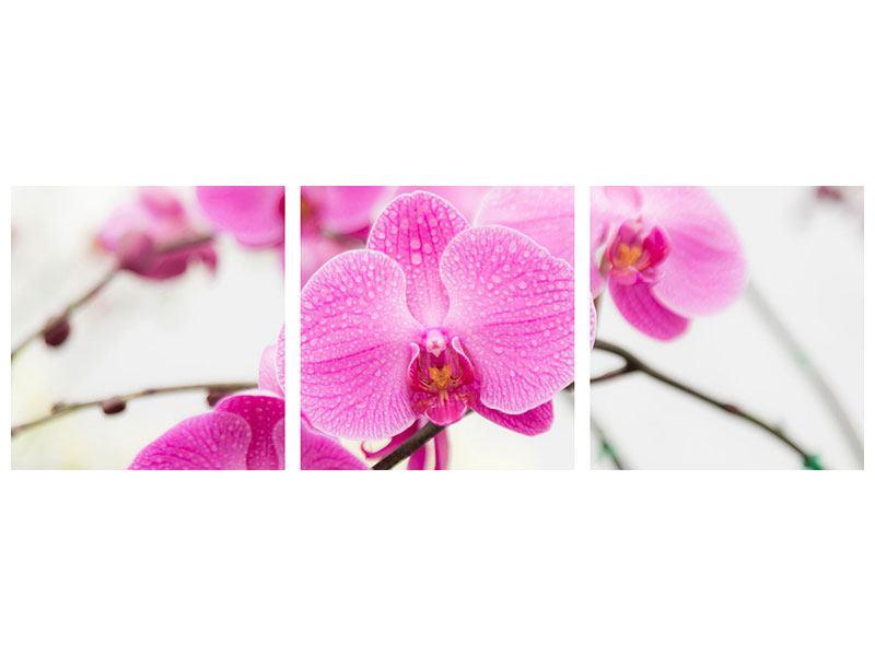 Panorama Leinwandbild 3-teilig Das Symbol der Orchidee