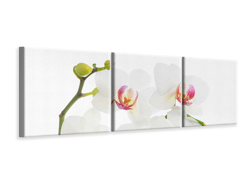Panorama Leinwandbild 3-teilig Orchideenliebe