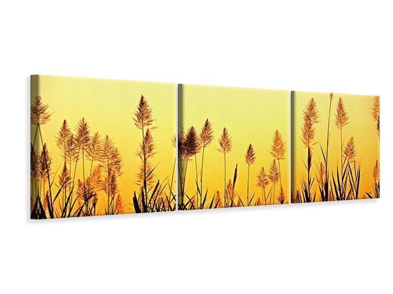 Panorama Leinwandbild 3-teilig Die Blumen des Feldes