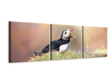 Panorama Leinwandbild 3-teilig Der Papageitaucher