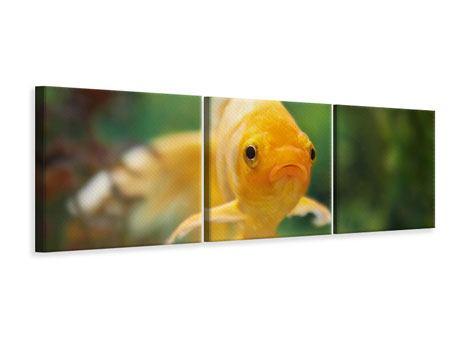 Panorama Leinwandbild 3-teilig Der Fisch