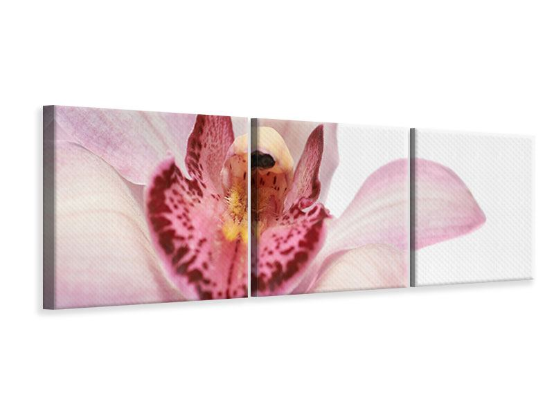 Panorama Leinwandbild 3-teilig Orchideenblüte XXL